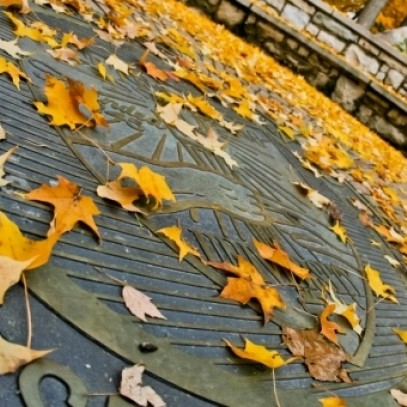 The Wittenberg Seal covered in yellow leaves